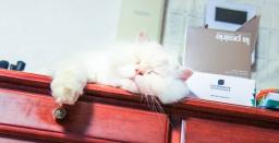 次男猫、寝落ちの瞬間